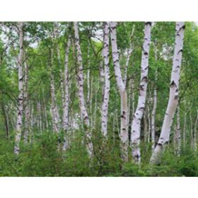 Rustic Decor & Natural Craft Woods