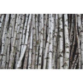 Birch Poles, Branches Sticks & Logs