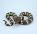 HOLIDAY Halloween Mega Boa Constrictor Prop