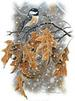 Apparel T-shirts Seasons HOLIDAYs Printed:''Winter Chickadee''