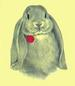 Apparel T-shirt HOLIDAYs Easter Printed:''Lop Ear Bunny''